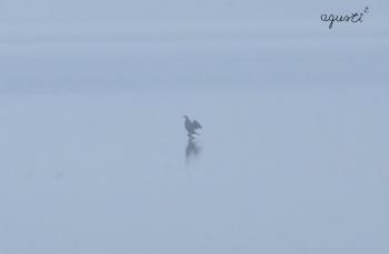 Cormora buscant el sol al panta de Riba-roja