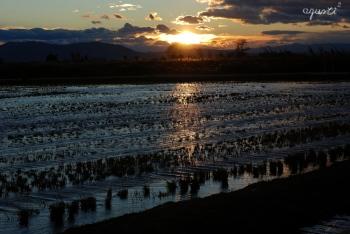 posta de sol al Delta d'Ebre