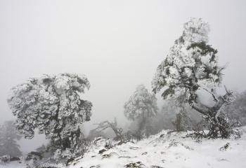 Pinsapar Sierra de las nieves
