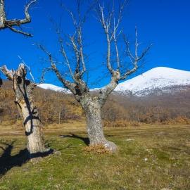 Moncayo nevado