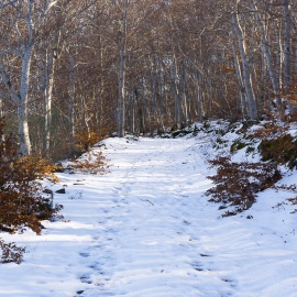 Moncayo nevado Hayedo