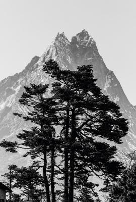 Tree & Mountain