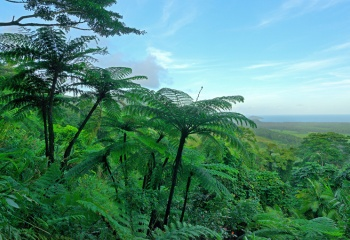 Cape Tribulation, QLD