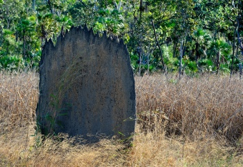 Magnetic Termite Mounds, Litchfield Natl. Park, NT