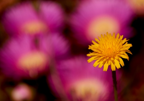 Macro & Flora