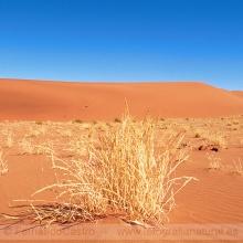 723-Desierto del Namib, Namibia
