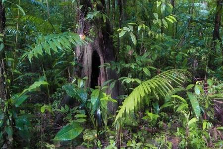 Estación Biológica La Selva, Costa Rica, Febrero 2009.