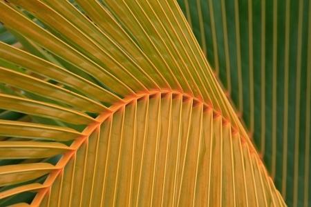 Corcovado National Park, Costa Rica, February 2009.
