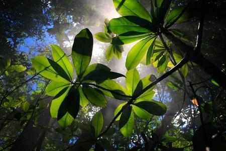 Parque Nacional Rincón de la Vieja, Costa Rica, Febrero 2009.