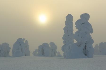 Golden mist I, Riisitunturi, Finland, February 2013.