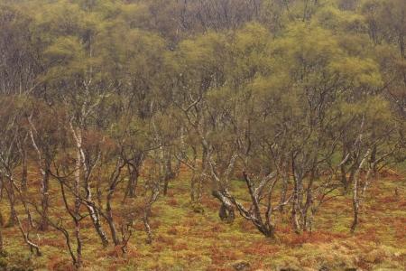 Highlands. Escocia