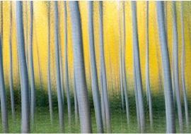 "porfolio: ""impresionismos"" título: ""homenaje a Gustav Klimt"""