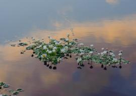 portfolio: illusions     title: a floating cloud