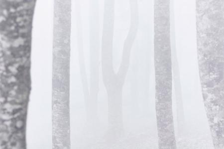 espectros en la niebla