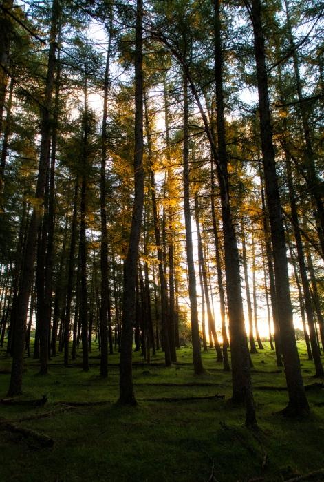 crepusculo boscoso