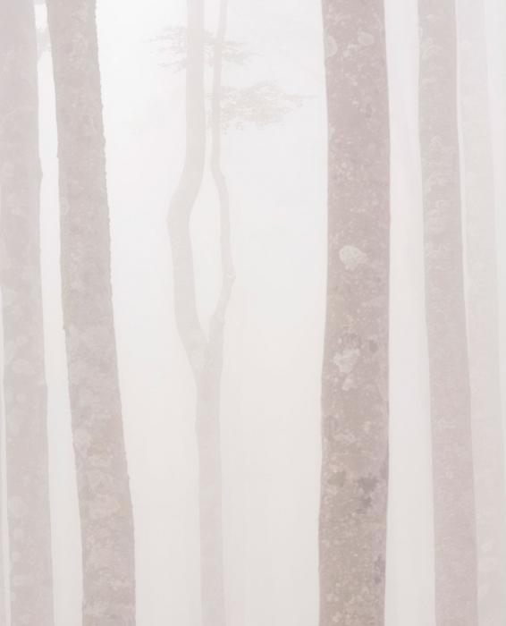Espectros en la niebla 2, Aralar.