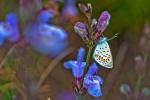 Mariposa en el pinar
