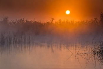 Sunrise in the marshes