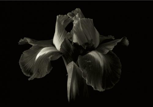 flores bn