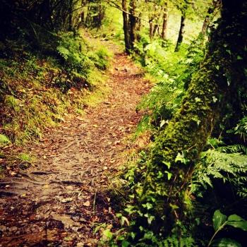 Trail | 2015 | Fragas do Eume - A Coruña, Spain