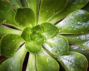 Plant | 2010 | Marrakech, Morocco