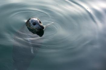 Seal | 2011 | A Coruña, Spain