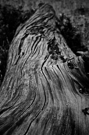 Wood | 2010 | Cala Varques | Mallorca, Spain