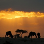 under sun of Kenya