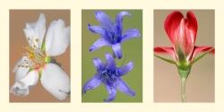 Composición 4. Triptico Flores silvestres.