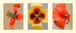 Composición 7. Flores silvestres.