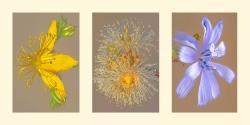 Composición 9. Flores silvestres.