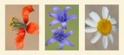 Composición 10. Flores silvestres.