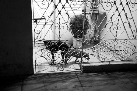 dog´s love in cuba, cuban photography fine art by louis alarcon