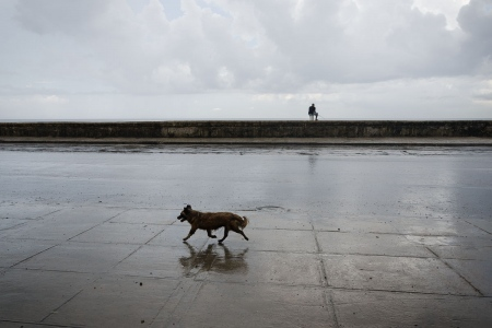 dogs in cuba in a wet day, photo by louis alarcon