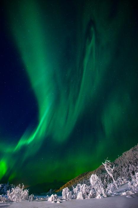 Aurora sobre bosque nevado