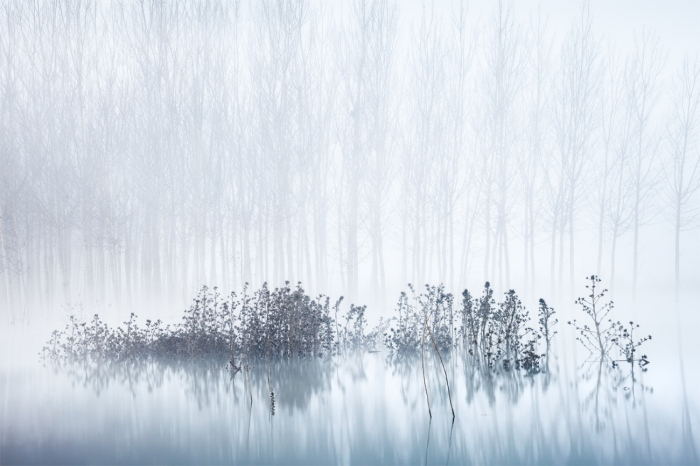 David Frutos Egea · Cold & Foggy Morning in the Swamp