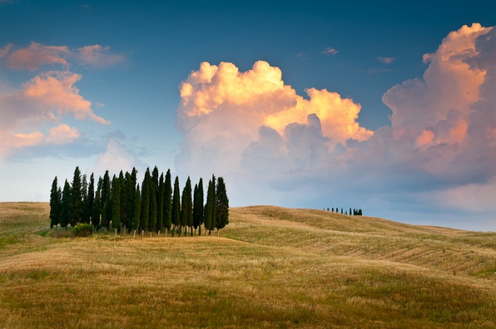 The herd. Landscape of Tuscany (Italy)