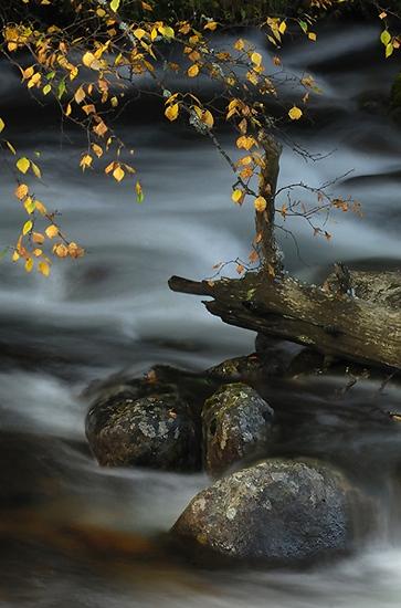 On the stream