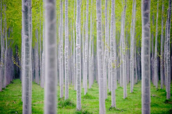 Ritmos Visuales en las bosques de chopos en Navarra (Nafarroa)