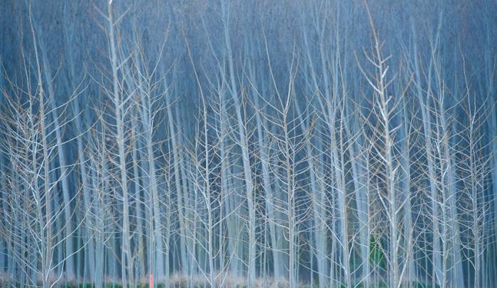 Koldo Badillo · Laberinto. Troncos de árboles sin hojas