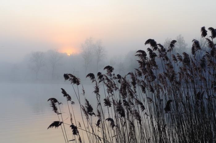 Dulce amanecer. Amanece en el Lago