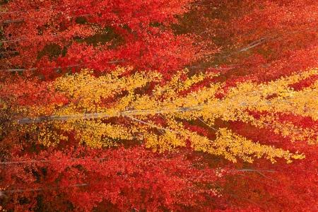 Uge Fuertes,Teruel, bandera España,planta,metáfora visual, simbolismo, fotografía, naturaleza,colores,rojo, amarillo, arte,vegetal, creatividad,chopos, otoño, hojas, color, art, creativity, fotogr