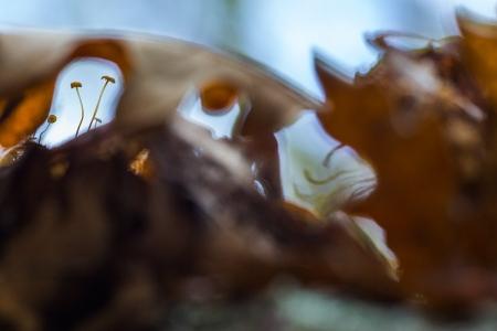 Uge Fuertes, Teruel, arte,planta, creatividad,metáfora visual, simbolismo,fotografia, naturaleza,  vegetal, art, creativity, expresión, setas, Albarracin, hojas, bosque