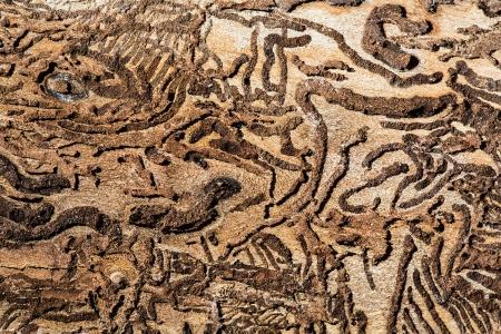 Uge Fuertes, Teruel, arte, creatividad,fotografia, naturaleza,  vegetal, art, creativity, expresión, tronco, visión aérea, escolítidos,metáfora visual, simbolismo
