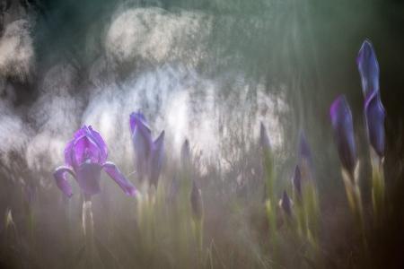 Uge Fuertes, Teruel, arte, creatividad,fotografia, metáfora visual, simbolismo, naturaleza,  vegetal, art, creativity, expresión, alma, exposición, flores, desenfocando la mirada, composición, pin