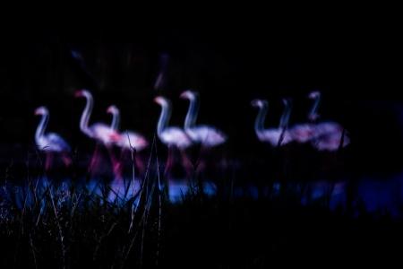 Uge Fuertes, Teruel, arte,impresionismo, barridos, creatividad,fotografia, metáfora visual, simbolismo, naturaleza, art, creativity, flamenco, flamingo, Camarga,pintura, pint, dream, pintando flamenc