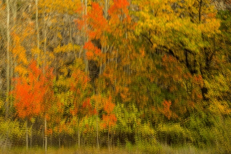 Uge Fuertes, Teruel, arte, creatividad,fotografia, metáfora visual, simbolismo, naturaleza,  vegetal, art, creativity, composición,picture,painting ,otoño, autumn, multiple exposición, Sierra de A
