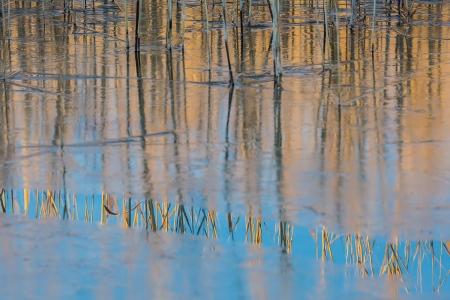 Uge Fuertes, Teruel, arte,Laguna de Gallocanta,reflejos, creatividad,fotografia, metáfora visual, simbolismo, naturaleza,  vegetal, art, creativity, composición,picture,painting ,otoño, autumn,