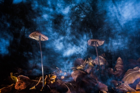 Uge Fuertes, Teruel, arte,setas, nocturna, experimentación, creatividad,fotografia, metáfora visual, simbolismo, naturaleza,  vegetal, art, creativity, composición,picture,painting ,otoño, autumn