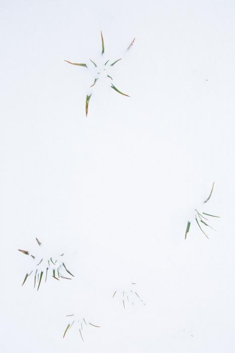 Uge Fuertes, Teruel, arte,planta, creatividad,metáfora visual, simbolismo,fotografia, naturaleza,  vegetal, art, creativity, expresión, gamón, nieve, estrella, hielo, blanco,